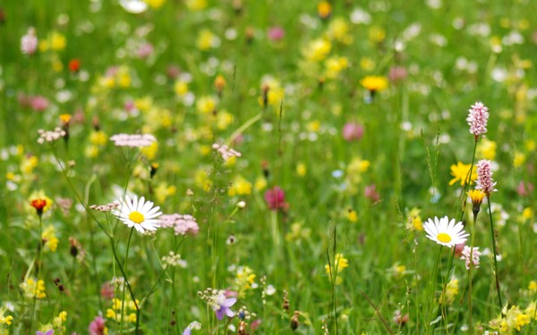Blumenwiese, Tag der Natur